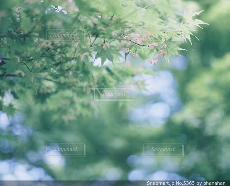 風景の写真・画像素材[5365]