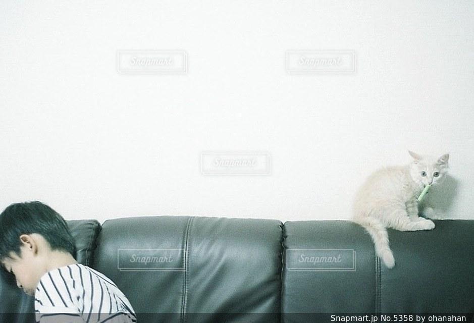 子どもの写真・画像素材[5358]