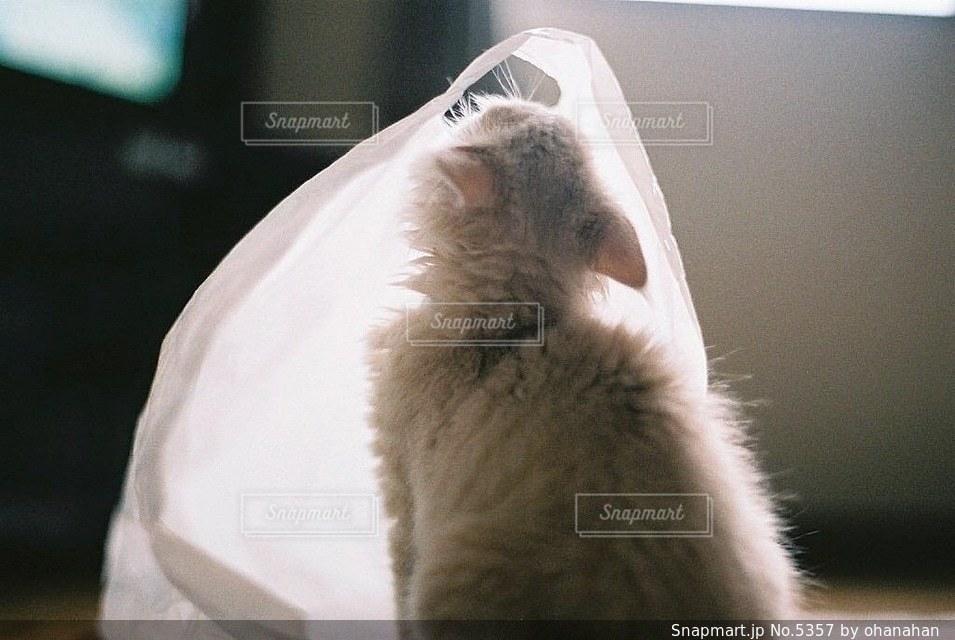 猫の写真・画像素材[5357]