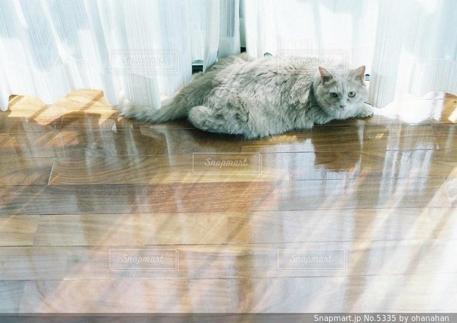 猫の写真・画像素材[5335]
