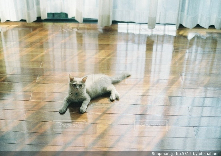 猫の写真・画像素材[5315]