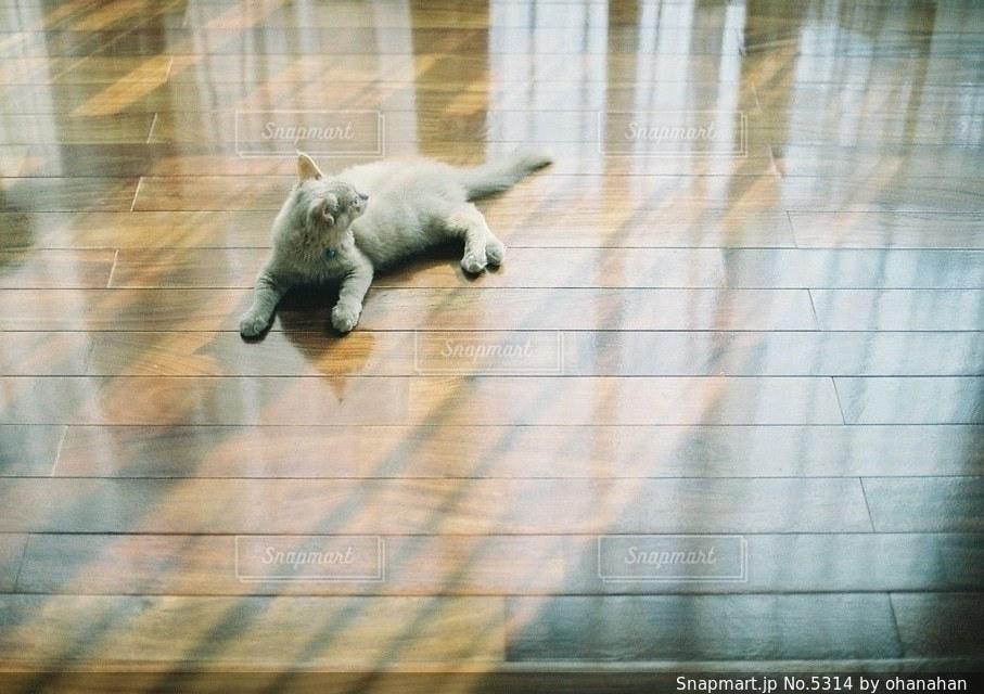 猫の写真・画像素材[5314]