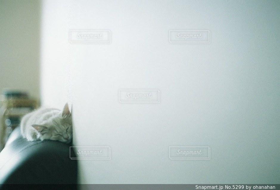 猫の写真・画像素材[5299]