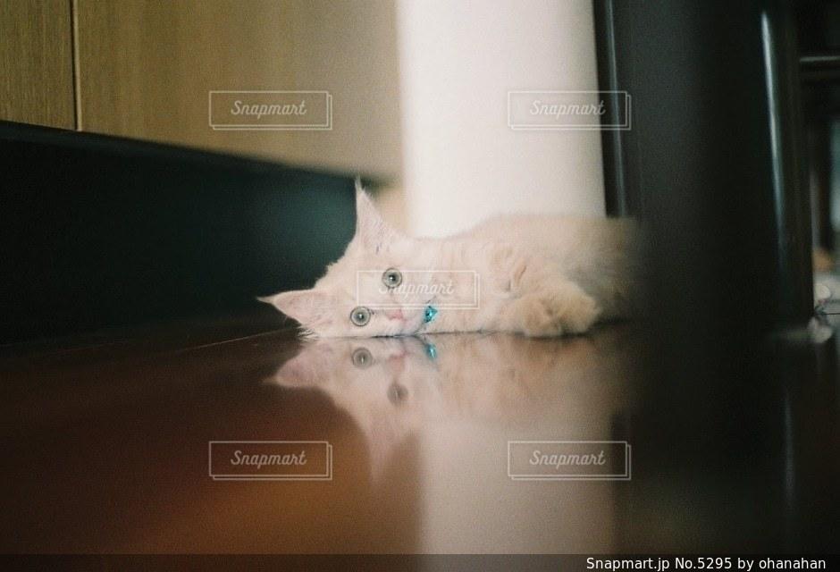 猫の写真・画像素材[5295]