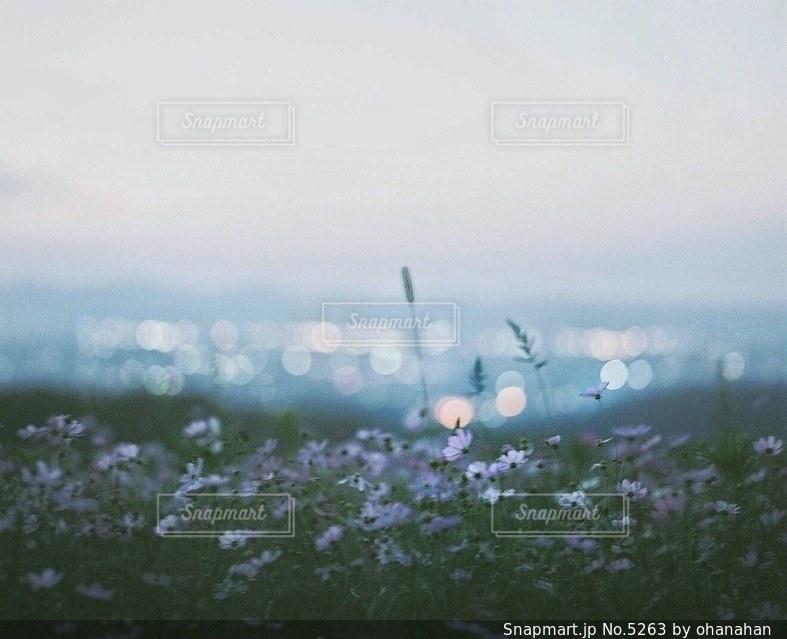 自然の写真・画像素材[5263]