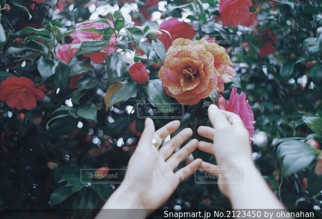 花を抱えている人の写真・画像素材[2123450]