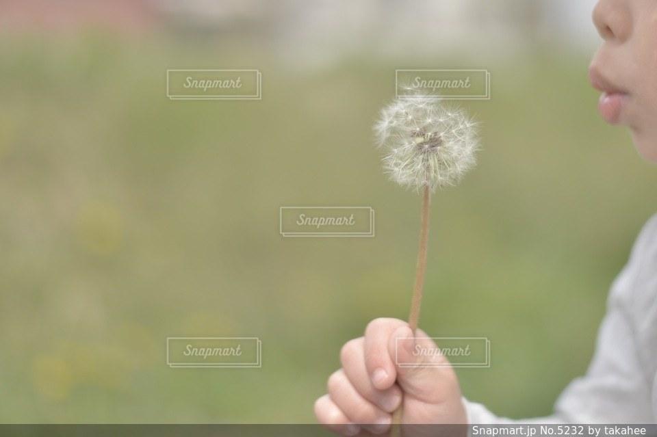 花の写真・画像素材[5232]
