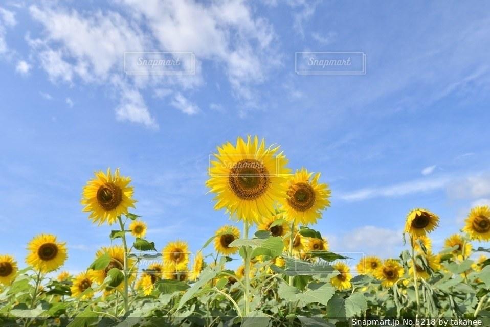 自然の写真・画像素材[5218]