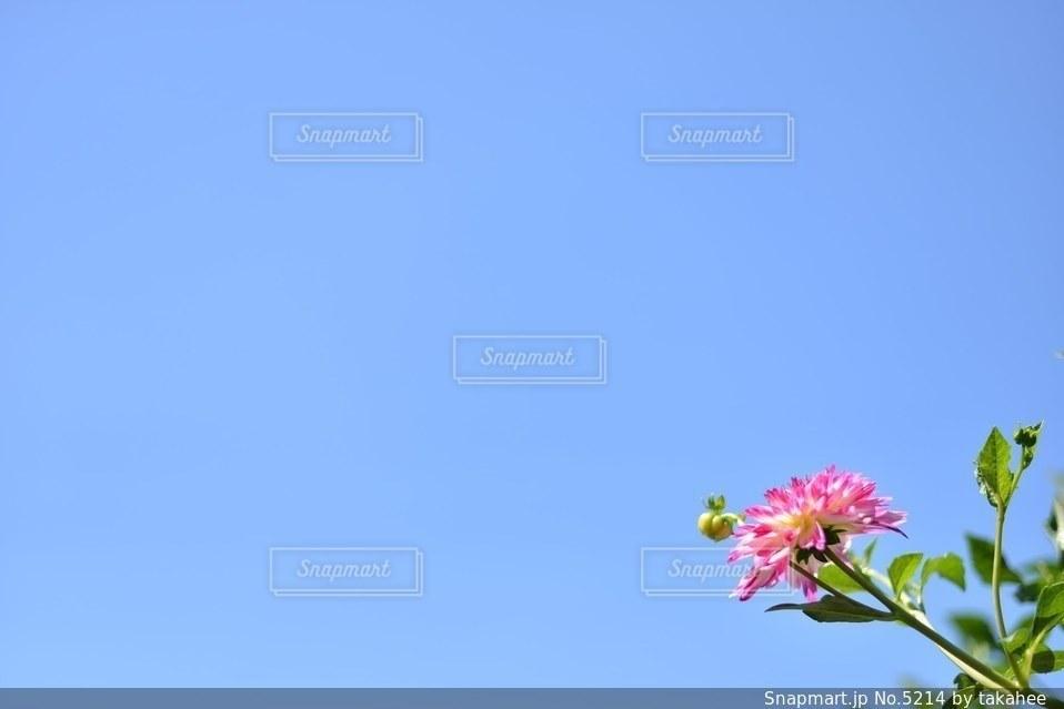 風景の写真・画像素材[5214]
