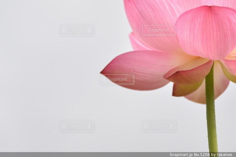 花の写真・画像素材[5208]