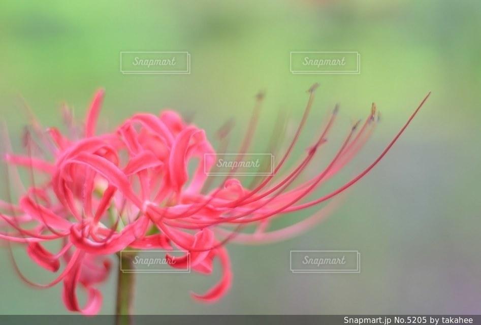 花の写真・画像素材[5205]