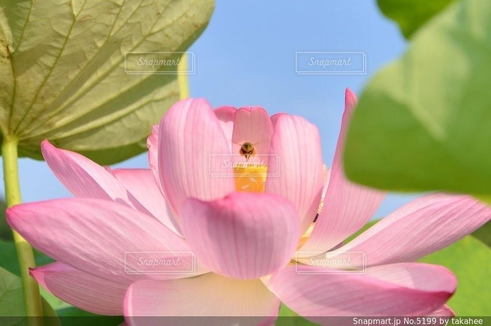 花の写真・画像素材[5199]