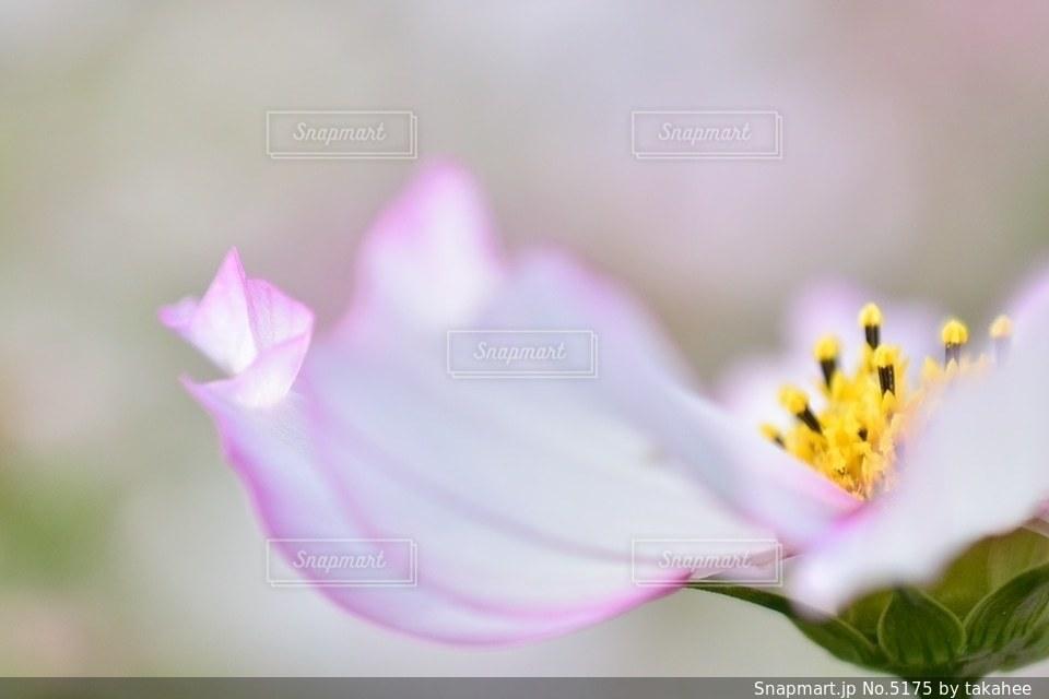 自然の写真・画像素材[5175]