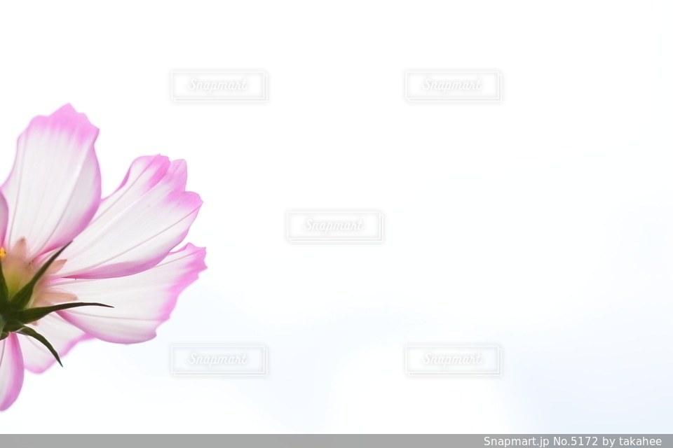 花の写真・画像素材[5172]