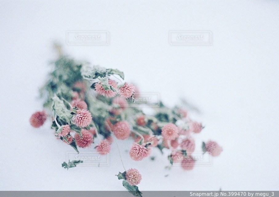 花の写真・画像素材[399470]