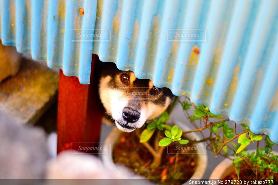 犬の写真・画像素材[279728]