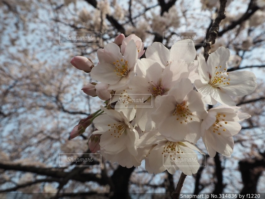 春の写真・画像素材[314836]