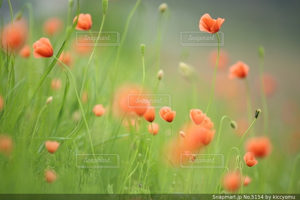 自然の写真・画像素材[5154]