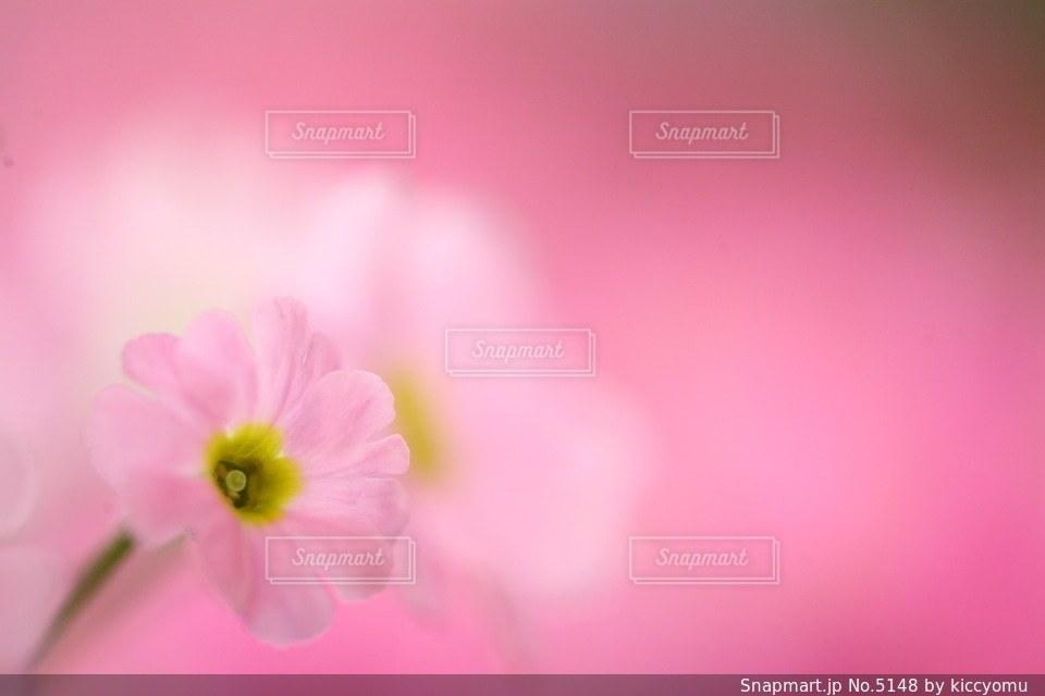 自然の写真・画像素材[5148]