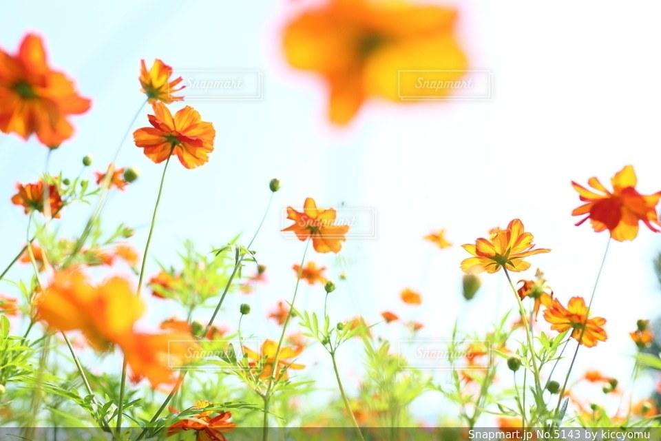 自然の写真・画像素材[5143]