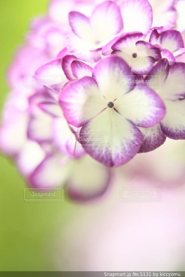 自然の写真・画像素材[5131]