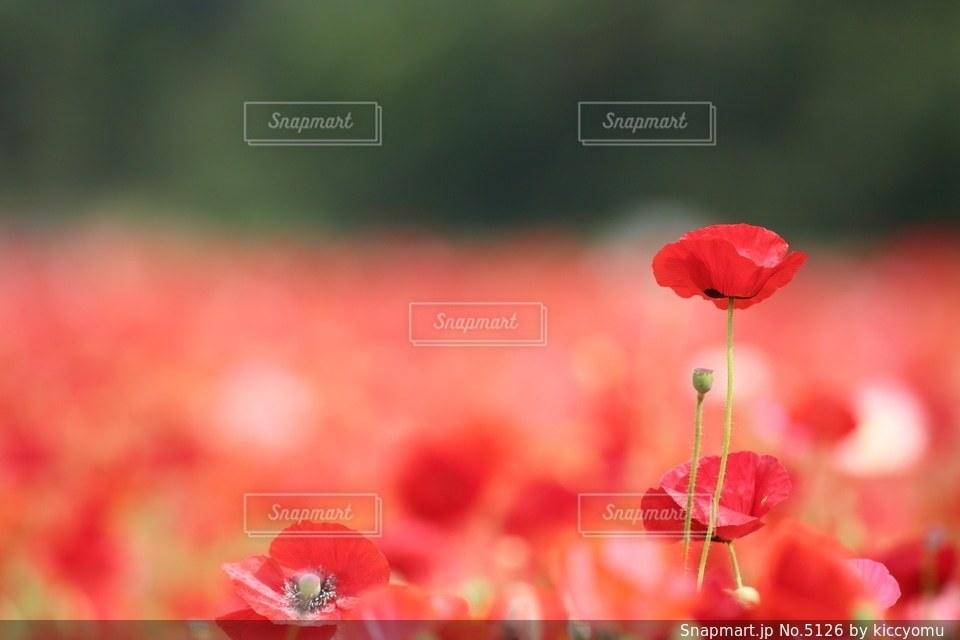 自然の写真・画像素材[5126]