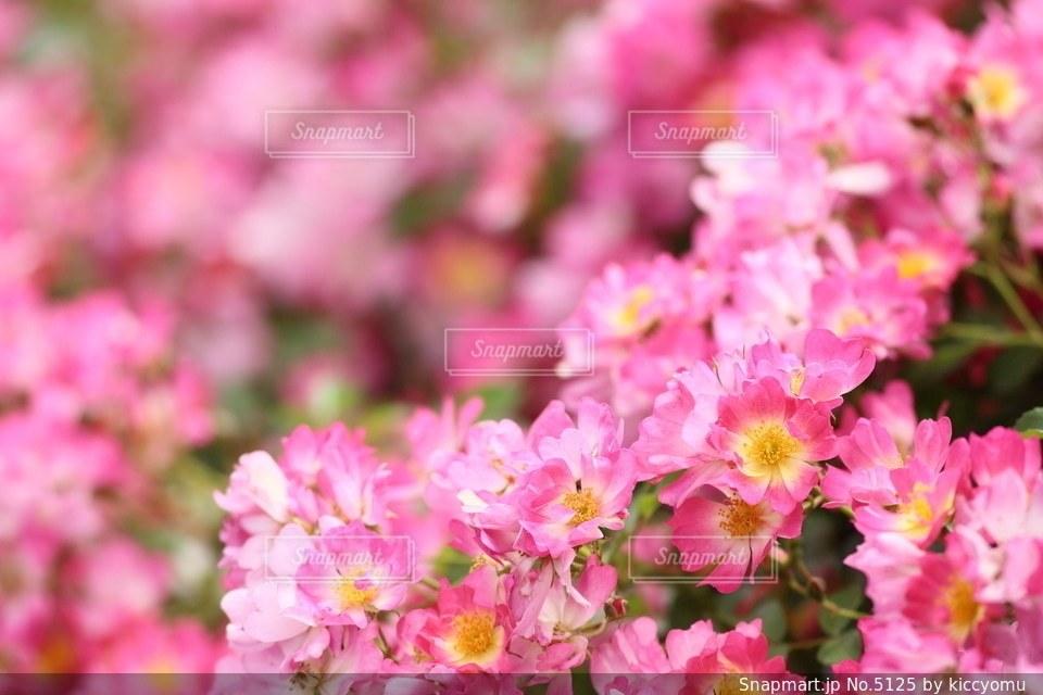 自然の写真・画像素材[5125]