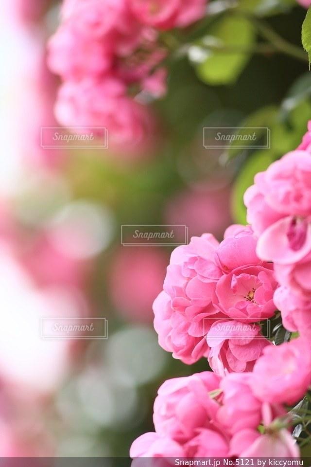 自然の写真・画像素材[5121]