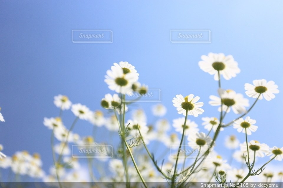 自然の写真・画像素材[5105]