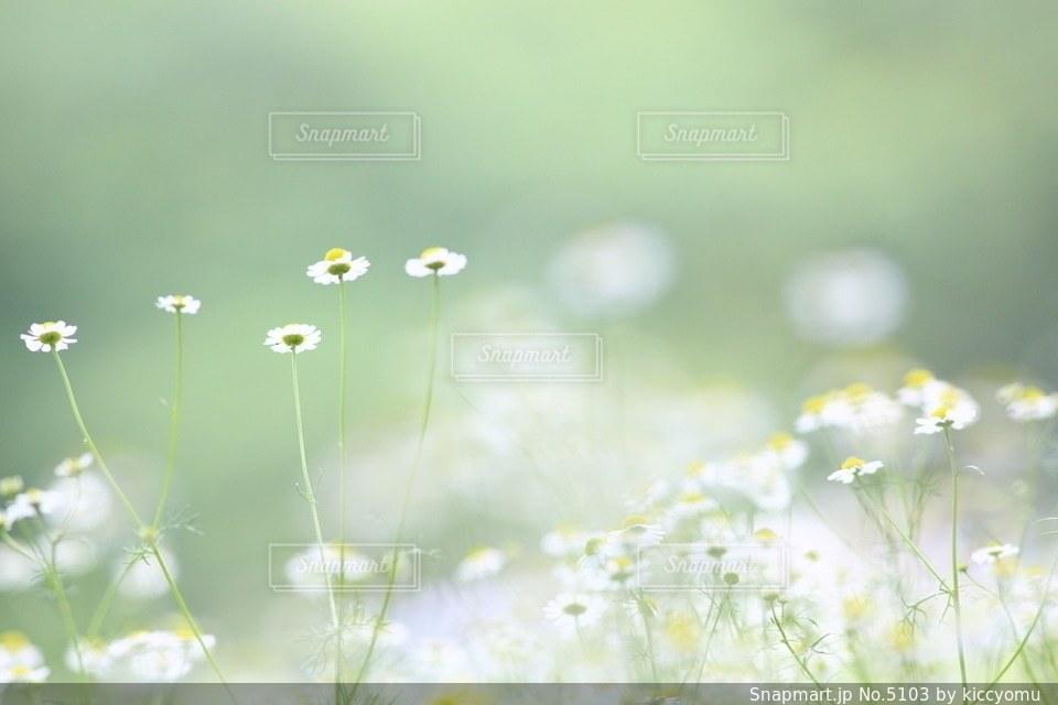 自然の写真・画像素材[5103]