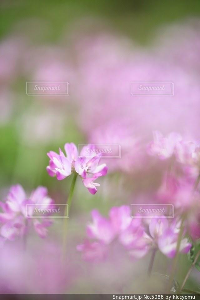 花の写真・画像素材[5086]