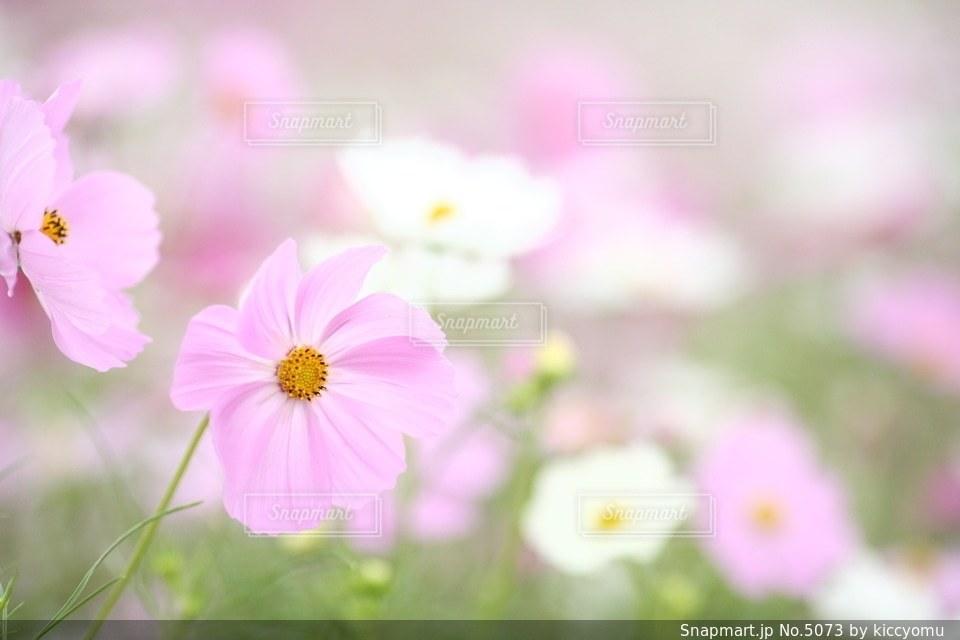 自然の写真・画像素材[5073]