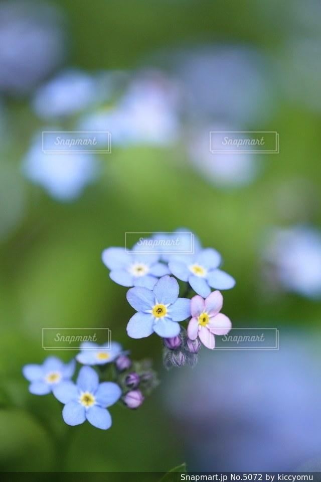 自然の写真・画像素材[5072]