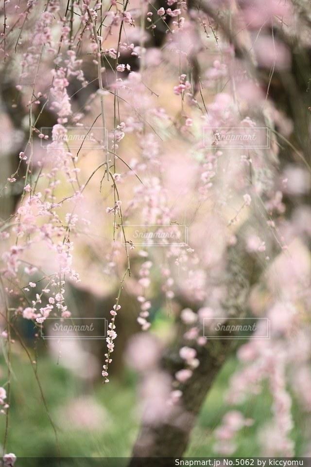 自然の写真・画像素材[5062]