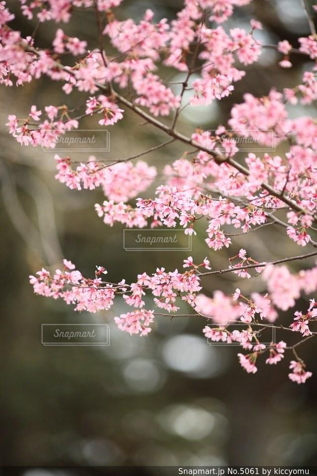 自然の写真・画像素材[5061]