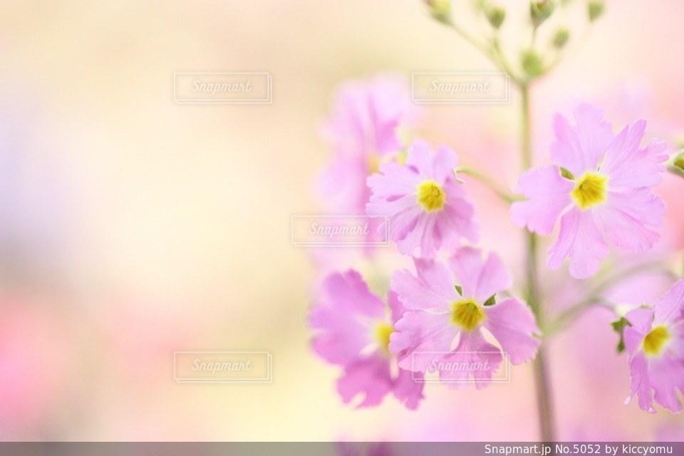 自然の写真・画像素材[5052]