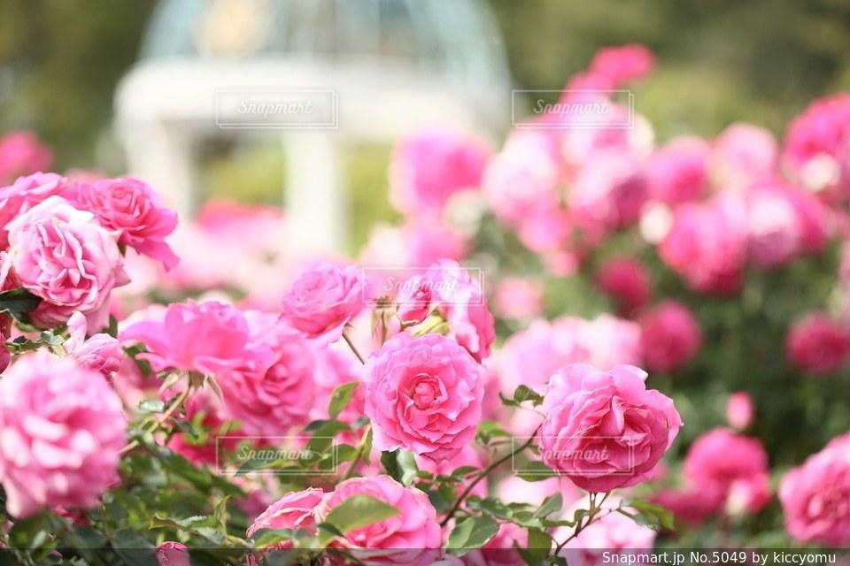 花の写真・画像素材[5049]