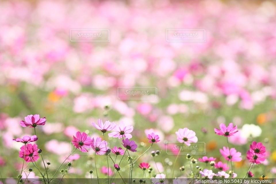 自然の写真・画像素材[5041]