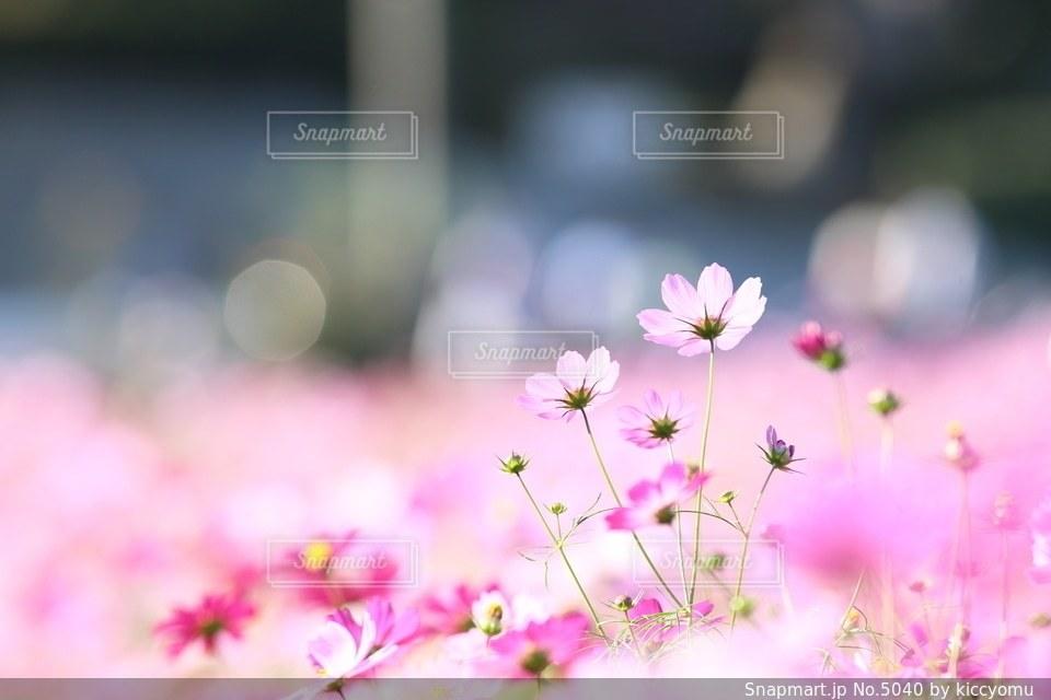 自然の写真・画像素材[5040]