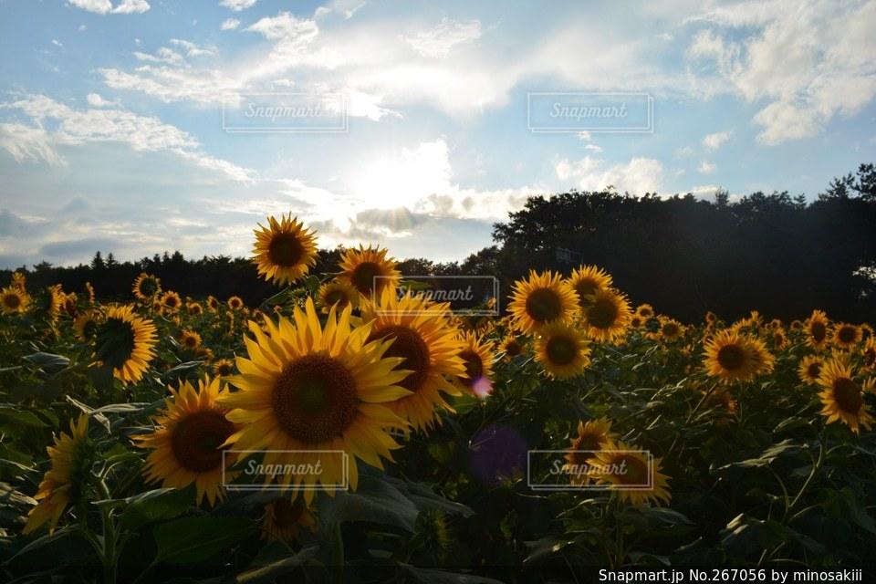 自然の写真・画像素材[267056]