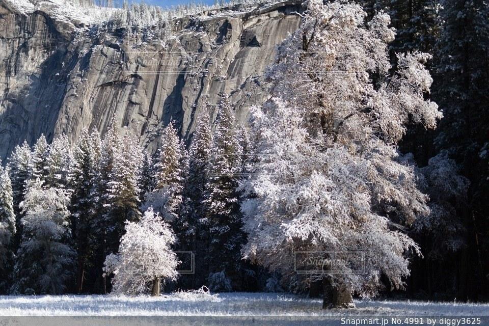 自然の写真・画像素材[4991]