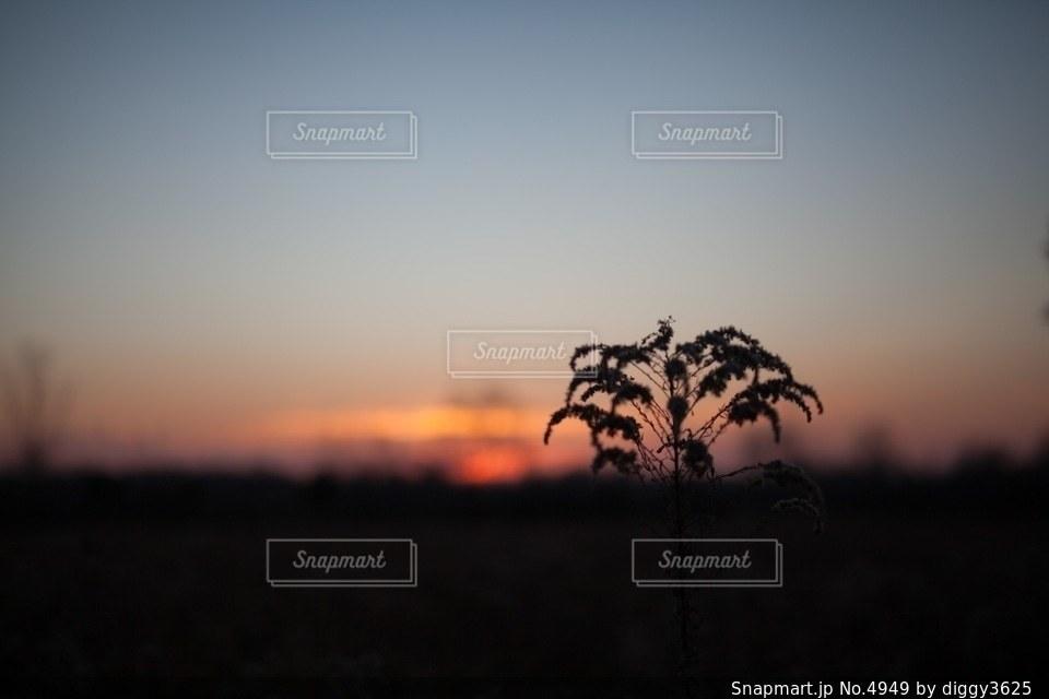 自然の写真・画像素材[4949]