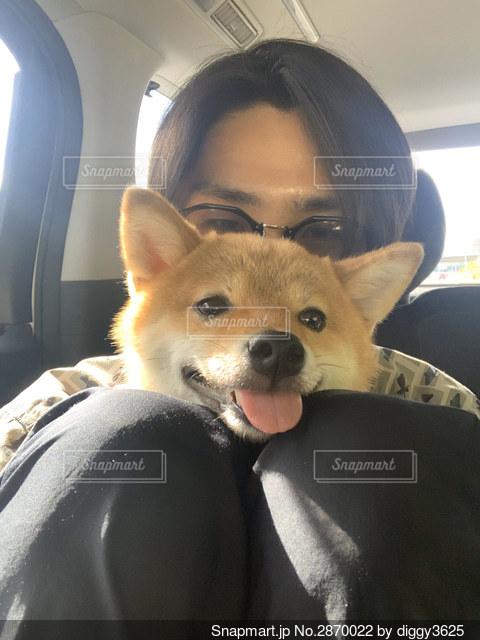 車の座席に座っている犬の写真・画像素材[2870022]