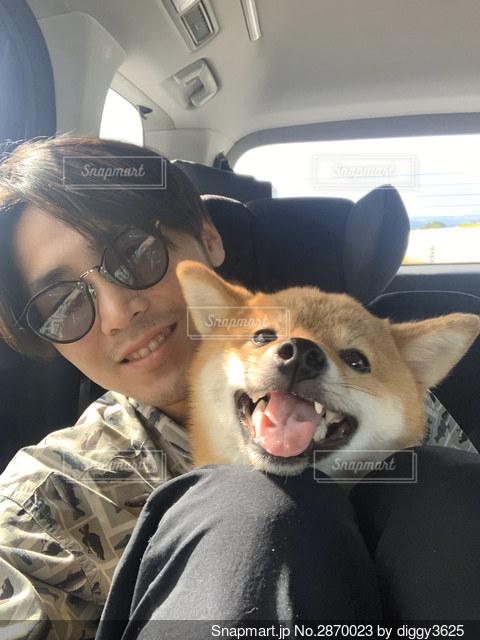 車の座席に座っている犬の写真・画像素材[2870023]