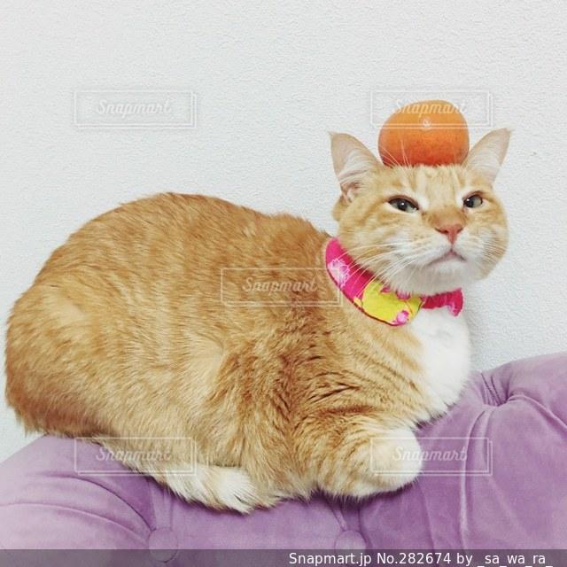 猫の写真・画像素材[282674]