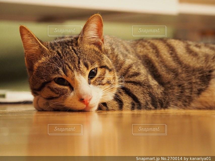 猫の写真・画像素材[270014]