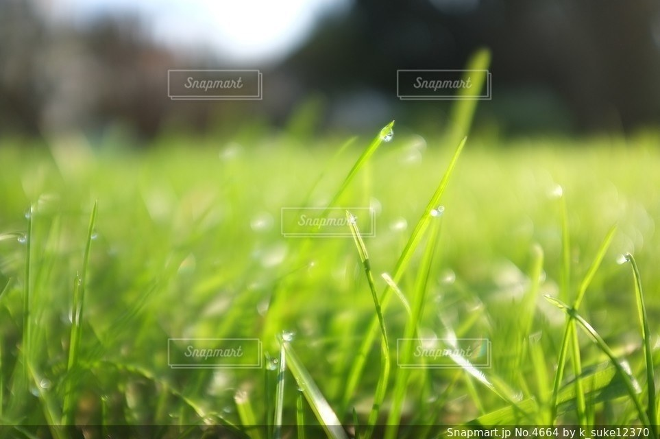 自然の写真・画像素材[4664]