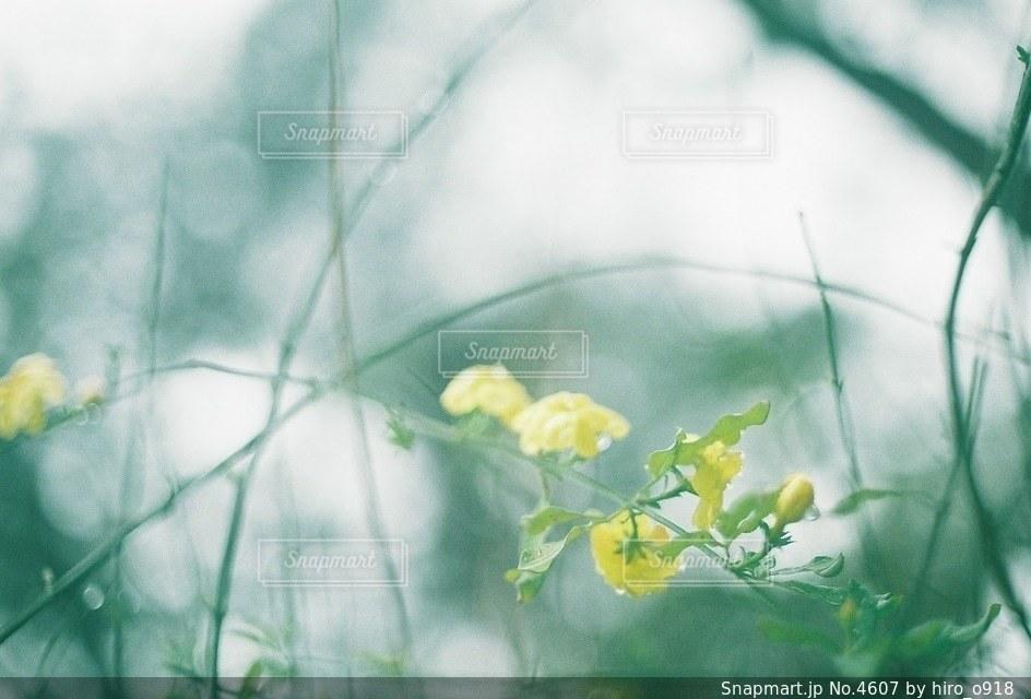 自然の写真・画像素材[4607]