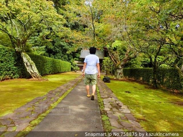 木の隣に歩道を歩いてる男の写真・画像素材[758875]
