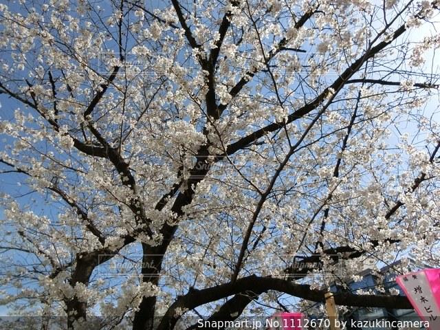 近くの木のアップの写真・画像素材[1112670]